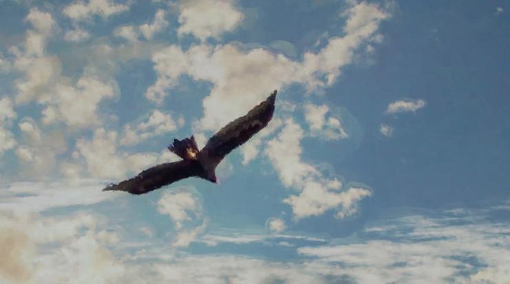 eagle-2-web