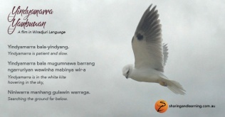 yindyamarra postcards A3