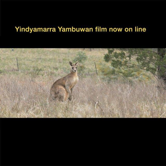 Yindyamarra Yambuwan Kangaroo